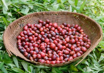 Uganda Coffee Federation